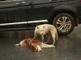 amigo falecido na estrada