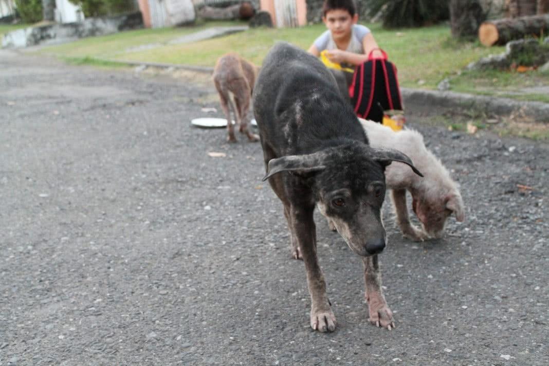 alimentar animais de rua