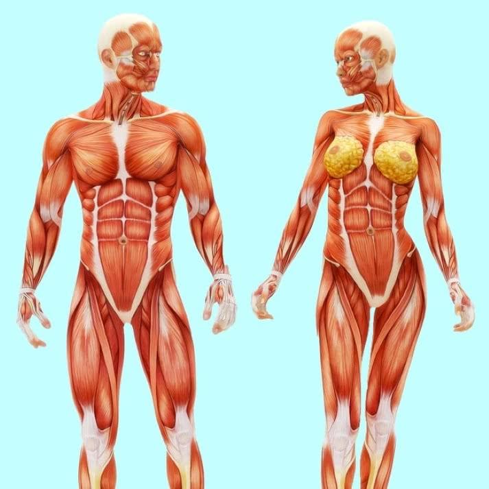 Melhorias que acontecem ao teu corpo