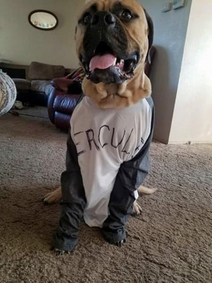 cão de assistência estiver perto de ti