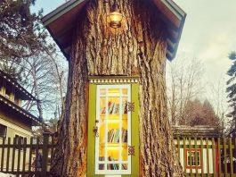 árvore de 110 anos numa biblioteca gratuita