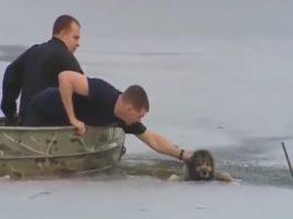 Bombeiros salvam cão