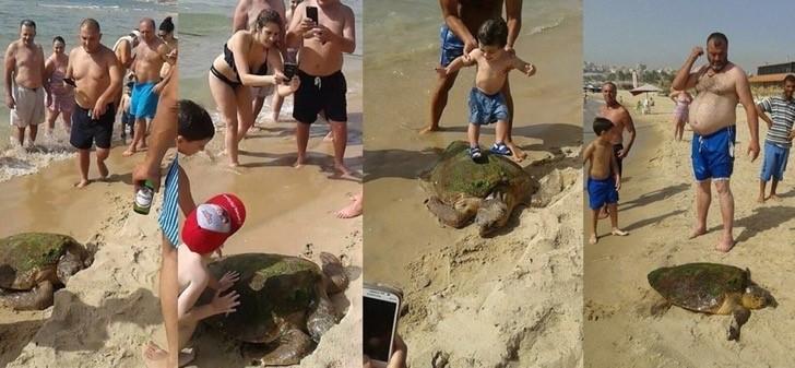 retiram tartaruga do mar
