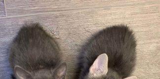 Gatos apegam-se aos donos