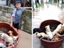 Criança usa balde para salvar animais