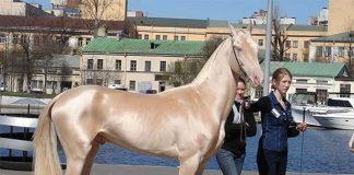 Cavalo dourado é considerado um dos mais lindos do mundo