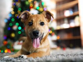 Ter um cachorro em casa deixa-te mais feliz